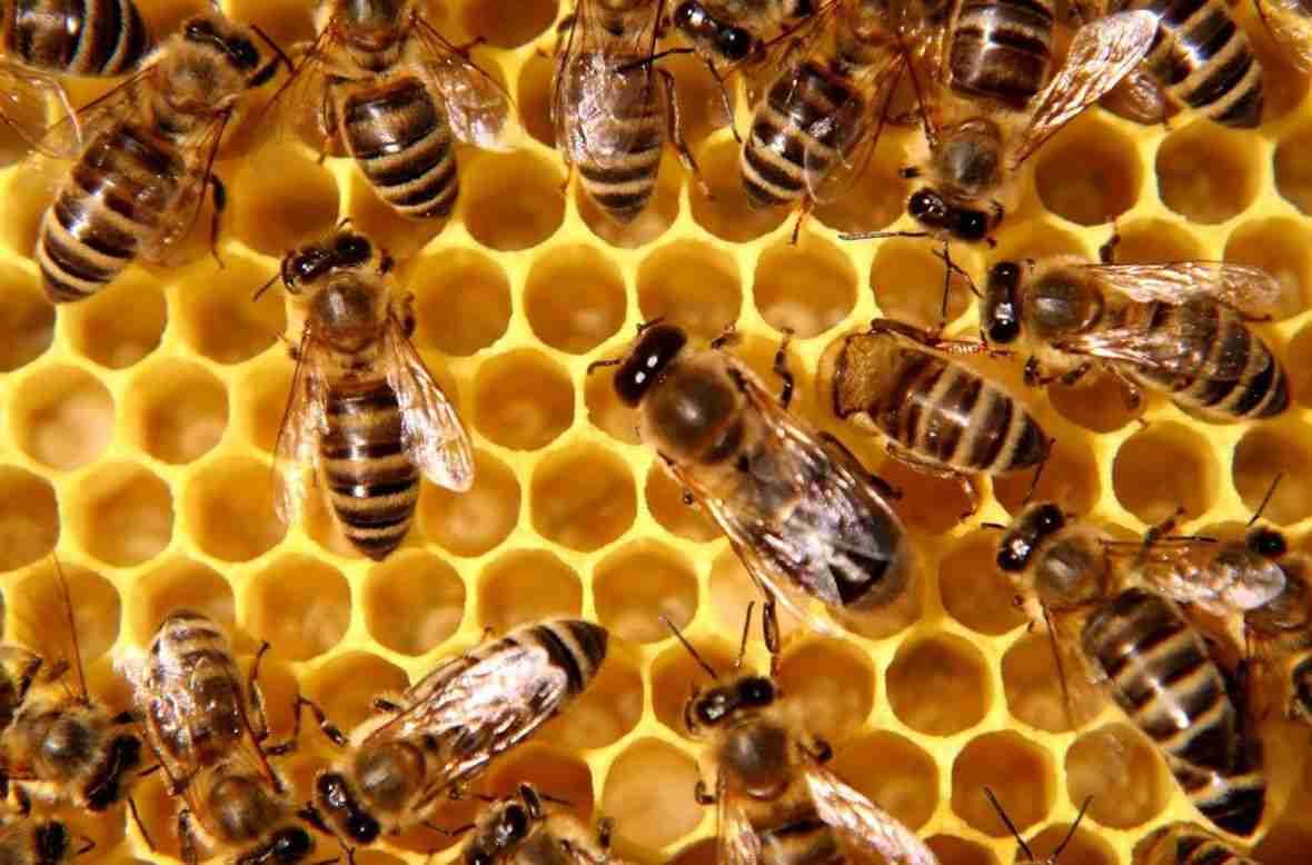 Slovenija će papi Franji darovati pčelinjak