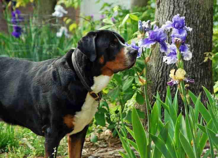 Uručene nagrade za 13 škola pobjednica takmičenja 'Moj pas, moja odgovornost'