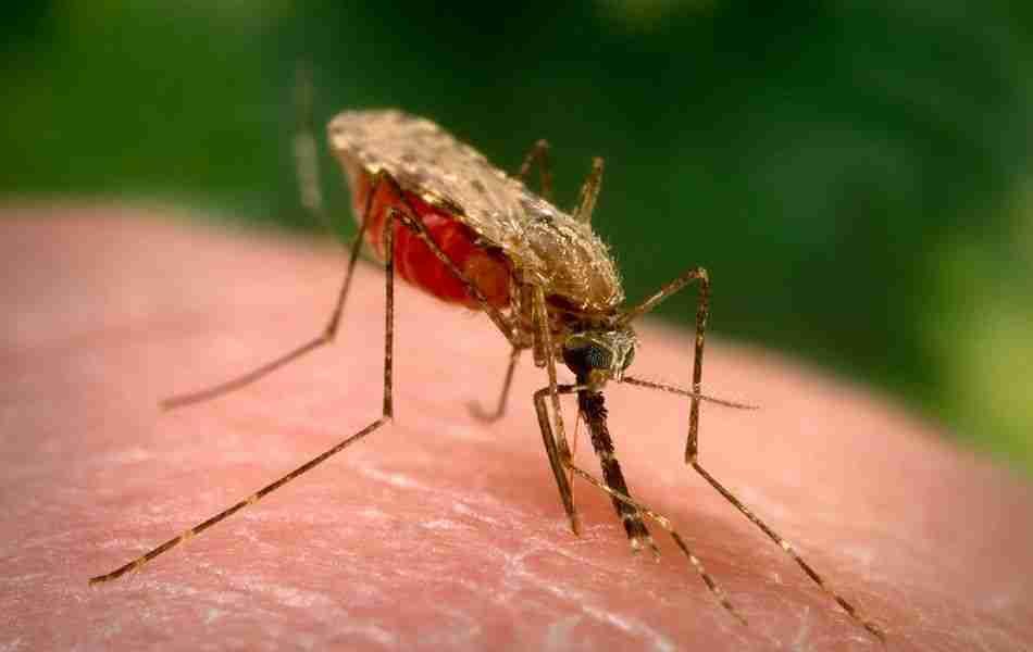 Toplija i vlažnija Evropa suočena s 'egzotičnim' bolestima