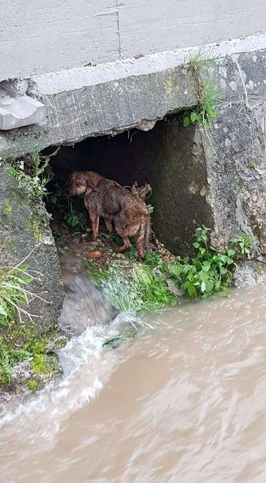 (FOTO/VIDEO) Travnički Vatrogasci spasili psa od utapanja u nabujaloj Lašvi
