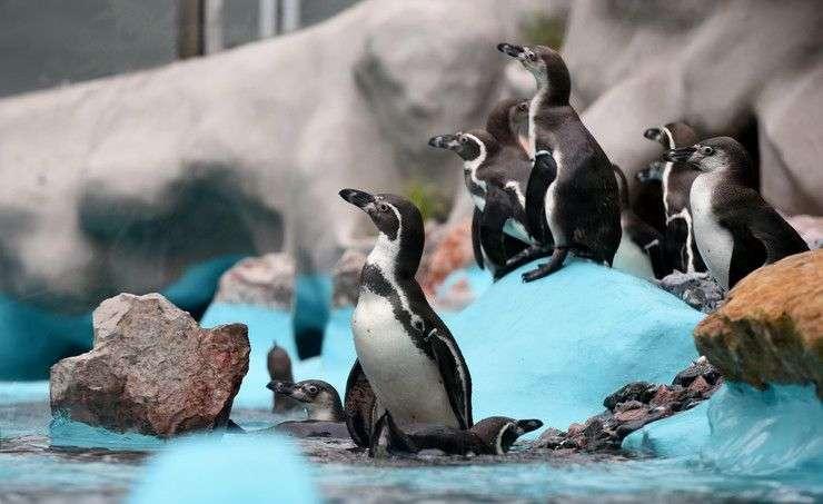 otvoren novi pingvinarijum u beogradskom zoo vrtu