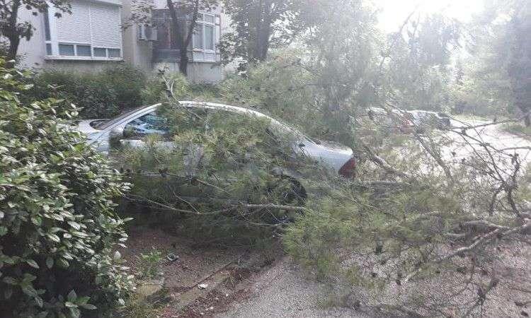 Jaki udari vjetra u Mostaru lomili stabla i oštetili dva automobila