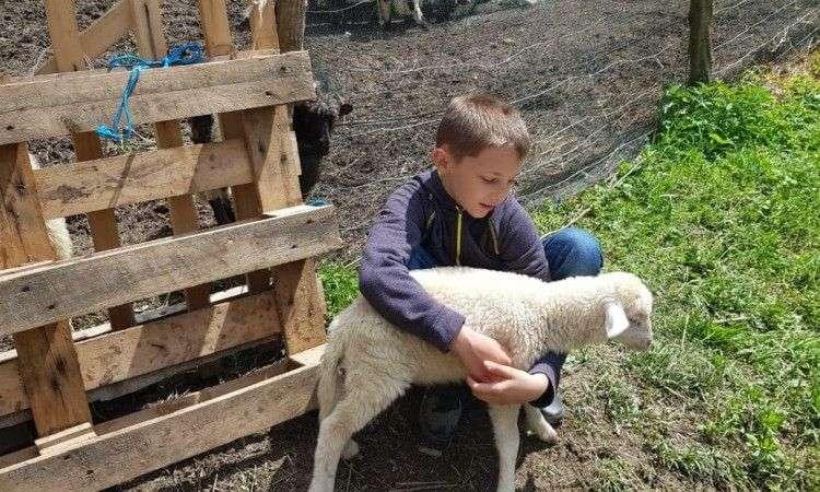 Dječaku Ameru Ibrahimoviću i njegovim roditeljima 'Merhamet' donirao ovce