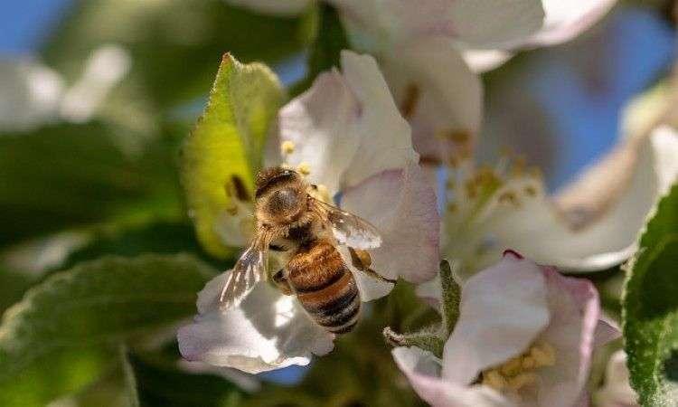 ambasada slovenije povodom svjetskog dana pčela organizira tribinu