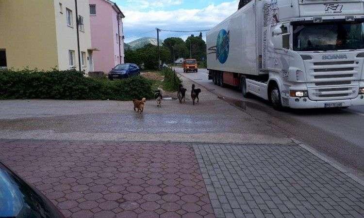 psi na buni napadaju ljude, gradske institucije šute