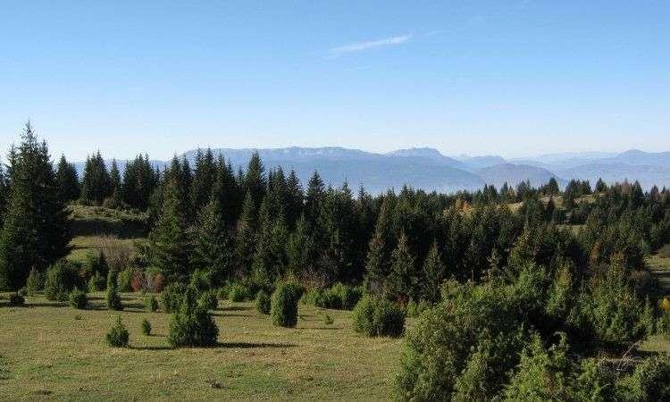 u fbih rast proizvodnje i prodaje šumskih sortimenata