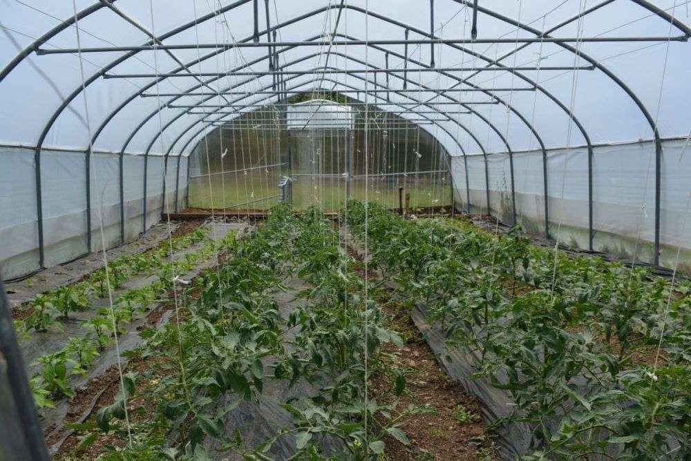 općina travnik: javni poziv za dodjelu poticaja poljoprivrednicima