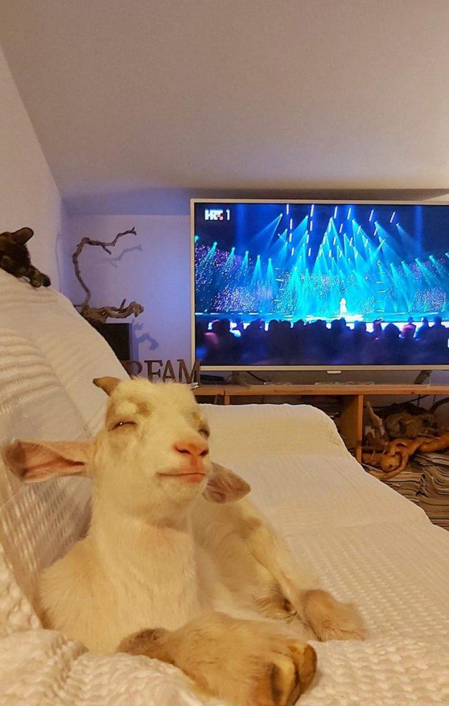 Spašen od smrti: Jarić Roky obožava gledati televiziju (FOTO/VIDEO)