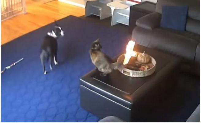 zbog reakcije mačke kojoj se zapalio rep na svijeći snimak postao hit