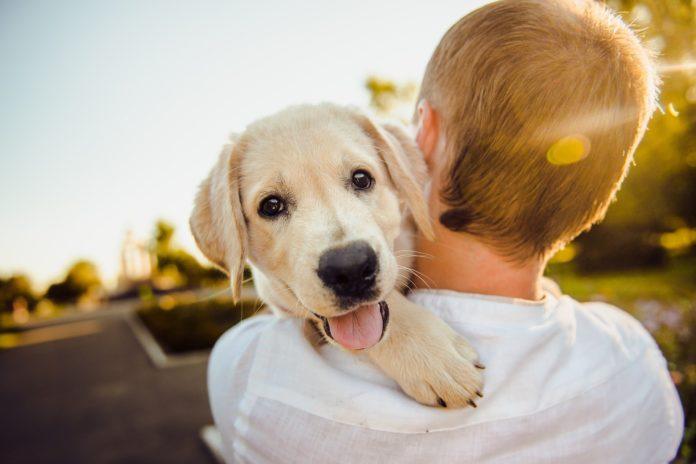 Šta vaš pas želi da vam kaže?
