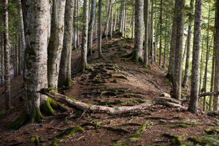 Svjetski dan šuma/ Obnova šuma – put ka oporavku i blagostanju!