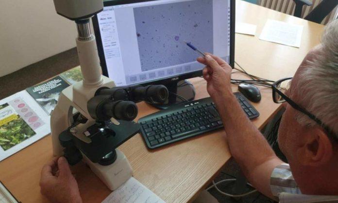 Svjetski dan prevencije astme prilika da se ukaže na značaj mjerenja polena