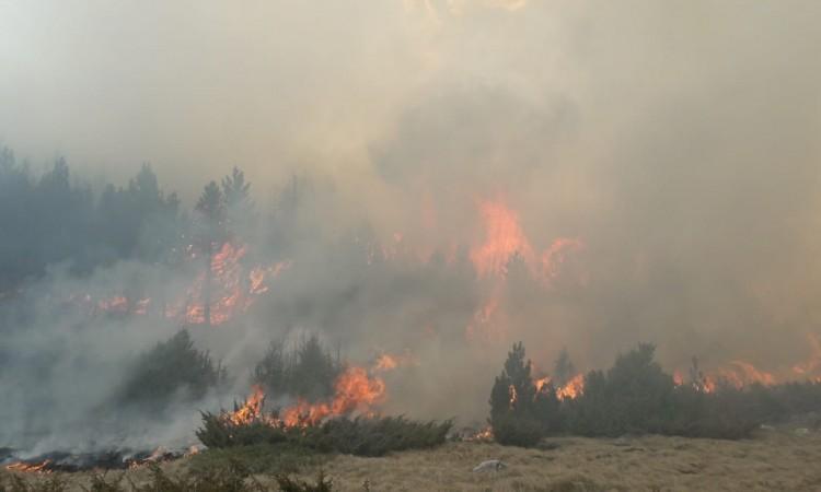šumski požari na jugu turske, troje poginulih i 50 povrijeđenih