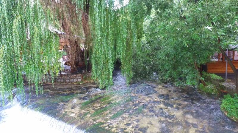 (VIDEO) PLAVA VODA TRAVNIK / Drvo palo na ljetnju baštu